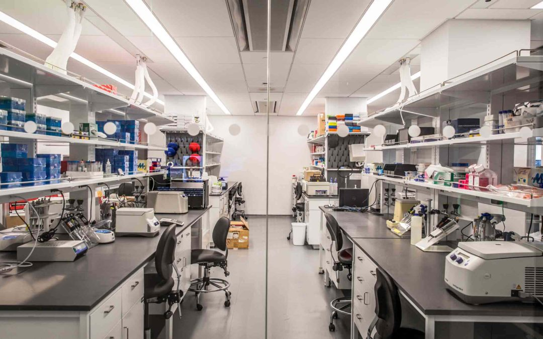 New York City: a New Hub for Stem Cell Research